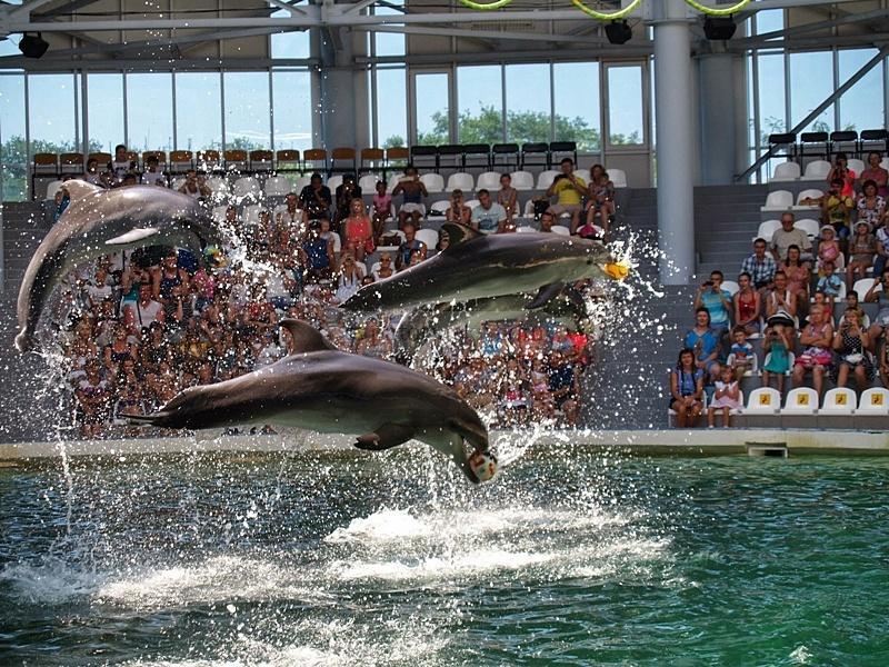 евпатория дельфинарий фото менеджер свяжется